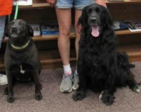 Therapy Dogs Po and Pepsi